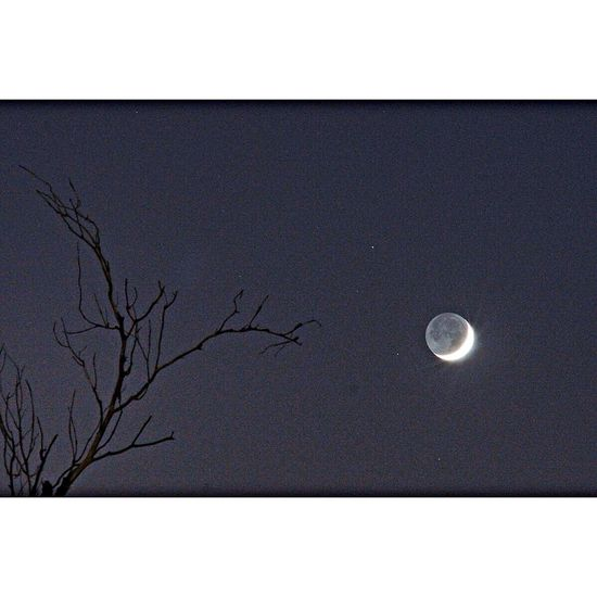 The Moon illuminated just 8% by sunlight but also illuminated by Earthshine (sunlight reflected off of the Earth into the Moon). Some parts of a dead tree from across the street give depth and character. Moon Earthshine Crescent Moon Astrophotography