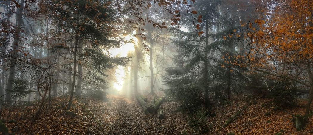 Showcase: January Wood Pfälzerwald Palatinate Fog Sunlight Autumn colors