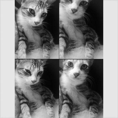Salam Ramadhan semuanya. Saya juga berpuasa :3 hahaha! Gemuk Catsgram Puasa *sbb taknak post gambar makanan jadi kita post gambar meow*