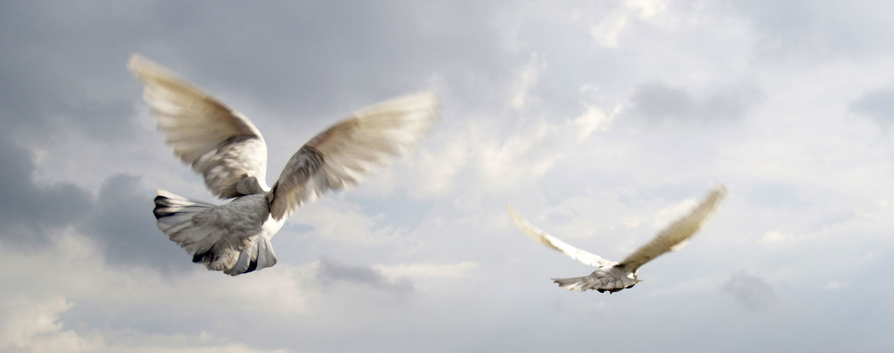 Low angle view of birds flying against the sky
