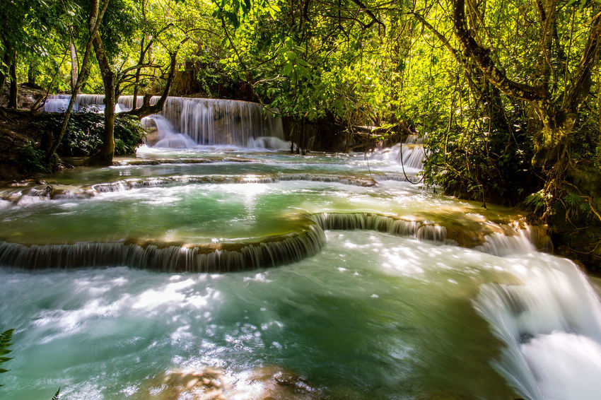 Tad Kuang Si waterfall Luang Prabang, Laos Luang Prabang, Laos Nature Nature Photography Travel Photography Traveling Tree Trunk World Heritage Site World Heritage Blue Water Deep Forrest Forest Forest Trees Fresh Landmark Laos Landscape_photography Laos Laos Travel Slow Flow Tad Kuang Si Waterfall Tree Area Water Drop Water Flowing Waterfall Waterfall Landscape Waterfall Laos
