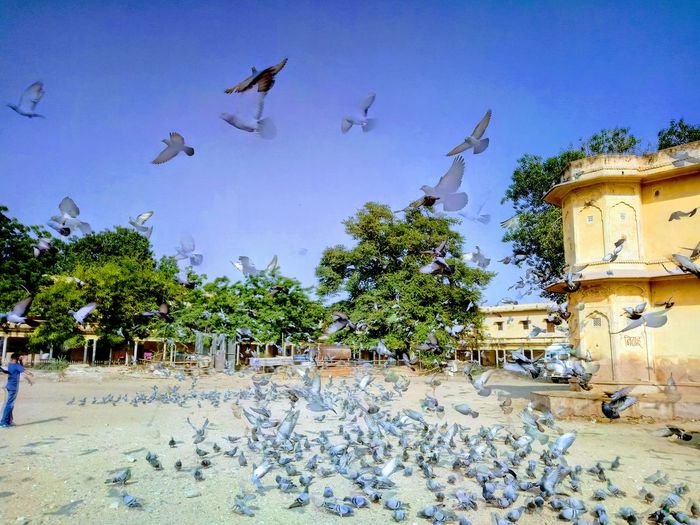 Pigeons Boy Watching Birds Birds Fluttering Hot Afternoon Sun Fun Click Happy Moment Little Times Of Joy Amd Happiness EyeEmNewHere Connected By Travel