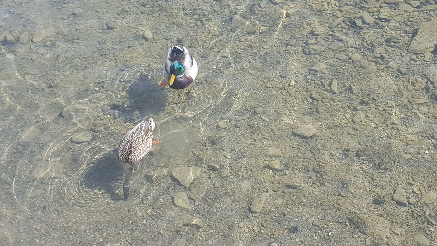 High angle view of fishes on beach