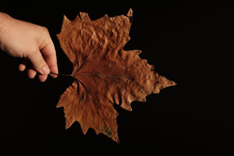 Autumn Autumn Collection Autumn Colors Autumn Leaves Collect Collection Colorful Colors Colour Of Life Dark Fall Fall Beauty Hand Handsome Leaf Leafs Photography Leaves Light Light And Shadow Shadow Structure