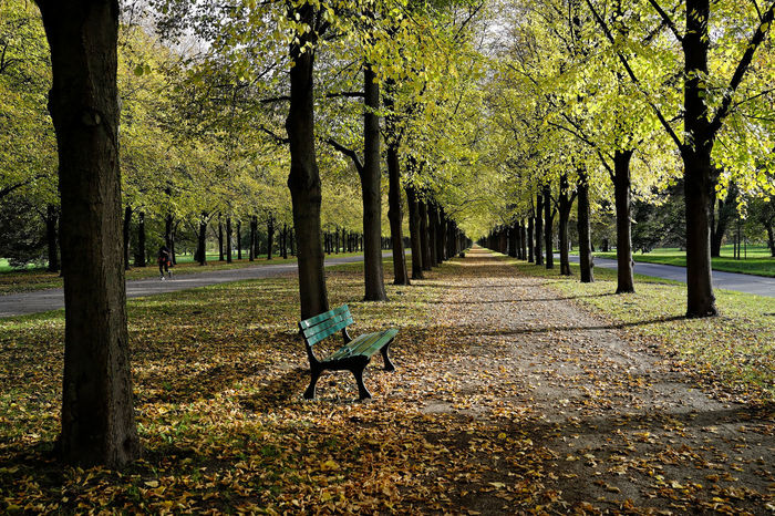 Baumallee Herbststimmung Lindenallee Absence Autumn Bank Beauty In Nature Day Empty Grass Growth Landscape Laubweg Leaf Nature No People Outdoors Park - Man Made Space Parking Scenics Tranquil Scene Tranquility Tree Tree Trunk