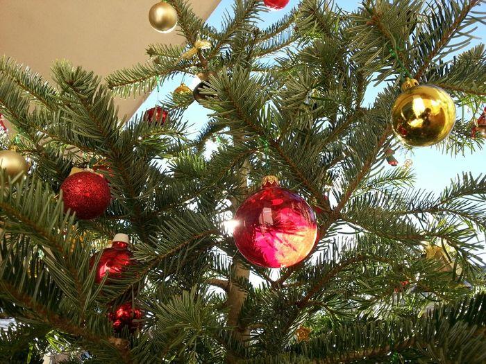 Christmas Tree / Juletræ / Arbre De Nadal