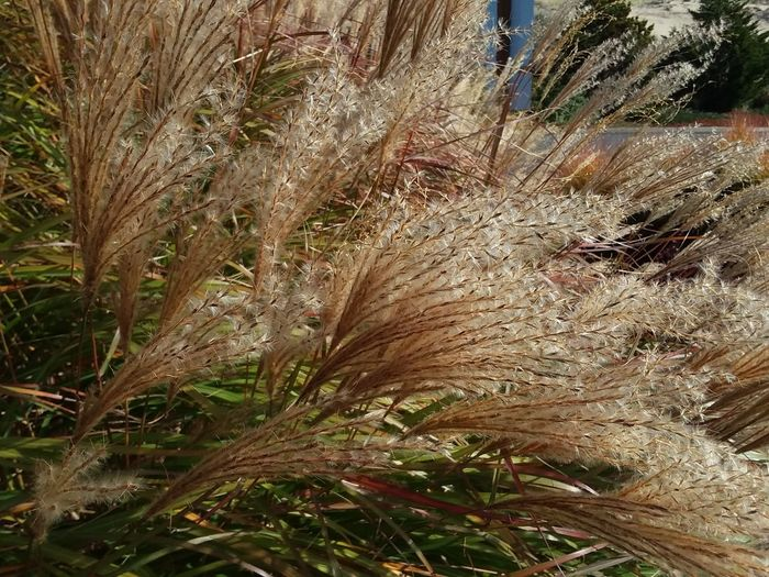 EyeEm Nature Lover Beauty In Nature Macro Photography Plant Life Full Frame Close-up Grass Plant