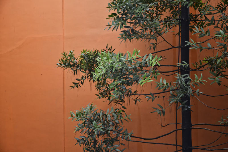 Nature Themes Nature Theme EyeEm Best Shots EyeEm Gallery EyeEm Nature Lover Nature Nature Photography Nature_collection Orange Showcase: January Simplicity Tadaa Community Tree Tropical Climate Composition Wall Wallpaint Orange Wall  Behind The Wall Open Space Outdoors