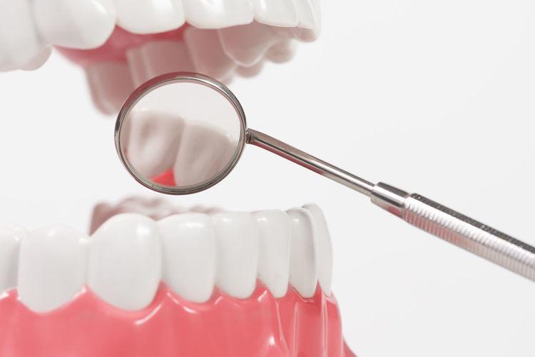 dental tool with dental medel Dental Model Dentist Mirror Tool