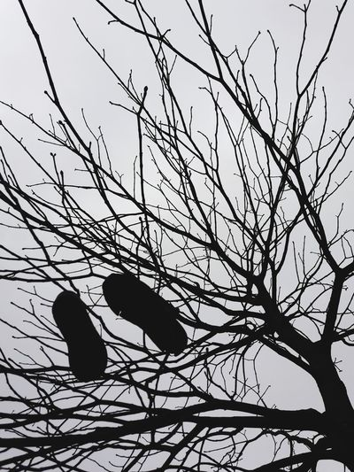 Cold Temperature A Pair Of Shoes A Pair Of Shoes Hanging In A Tree Tree Branch Bare Tree Silhouette The Photojournalist - 2018 EyeEm Awards