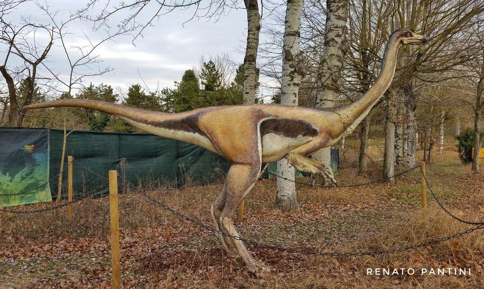 Gallimimus bullatus Gallimimus Dinosaur Dinosauro Dinosauri Dinosaurs Extinct Sculpture Replicas Replica  Chianciano Chianciano Terme