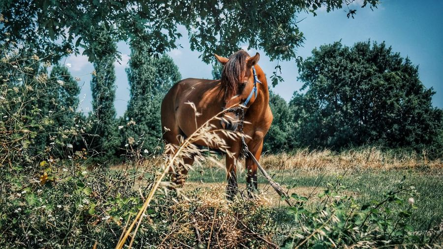 Hanging Out Check This Out Taking Photos Hello World Relaxing Cheese! Hi! Yeşil Bursa Turkey EyeEm Best Shots Hanging Out Bursalovers Bursa Turkishfollowers Turkeyphotos Getting Inspired Eye4photography  Horse Photography  Horse