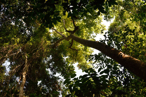 Low Angle View Nature Tree No People Full Frame Growth Backgrounds Green Color Beauty In Nature Outdoors Sky Day Branch Everyday Lives The Purist (no Edit, No Filter) Lifestyles Pattern Traveling A Day In The Life Sunshine Relaxation Recreation  Taman Negara National Park Rainforest Miles Away The Great Outdoors - 2017 EyeEm Awards