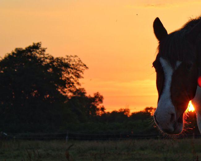 Good night Hawkeye Tadaa Community Sunset Sky Mammal Plant Animal Themes Animal Domestic Animals One Animal