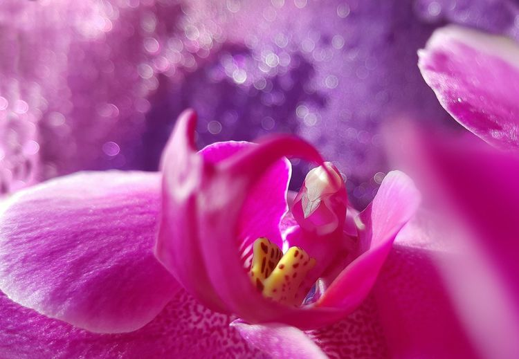 Orcid Orchids Pink Orchids Pink Orchid Pink Color Tadaa Community Fragility Samsung Photography Macro Photography Bohkehlicious Samsung Phone Macro Beauty Colorsplash Flower Head