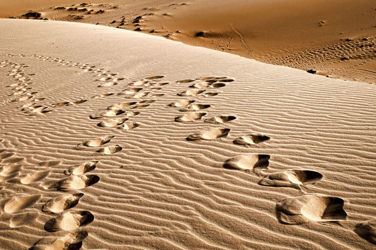 Arid Climate Beauty In Nature Day Desert Foodsteps Landscape Nature No People Outdoors Paw Print Sand Sand Dune Sunlight Track - Imprint Tranquility Footsteps In The Sand Footstep Together Forever
