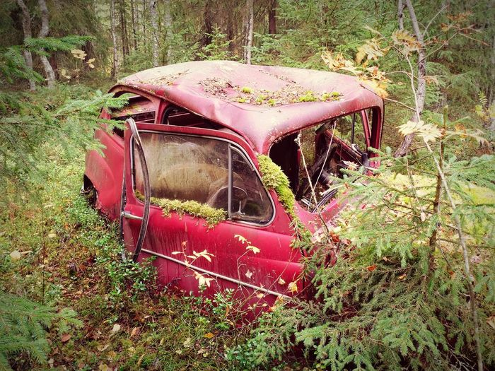 old car Forest