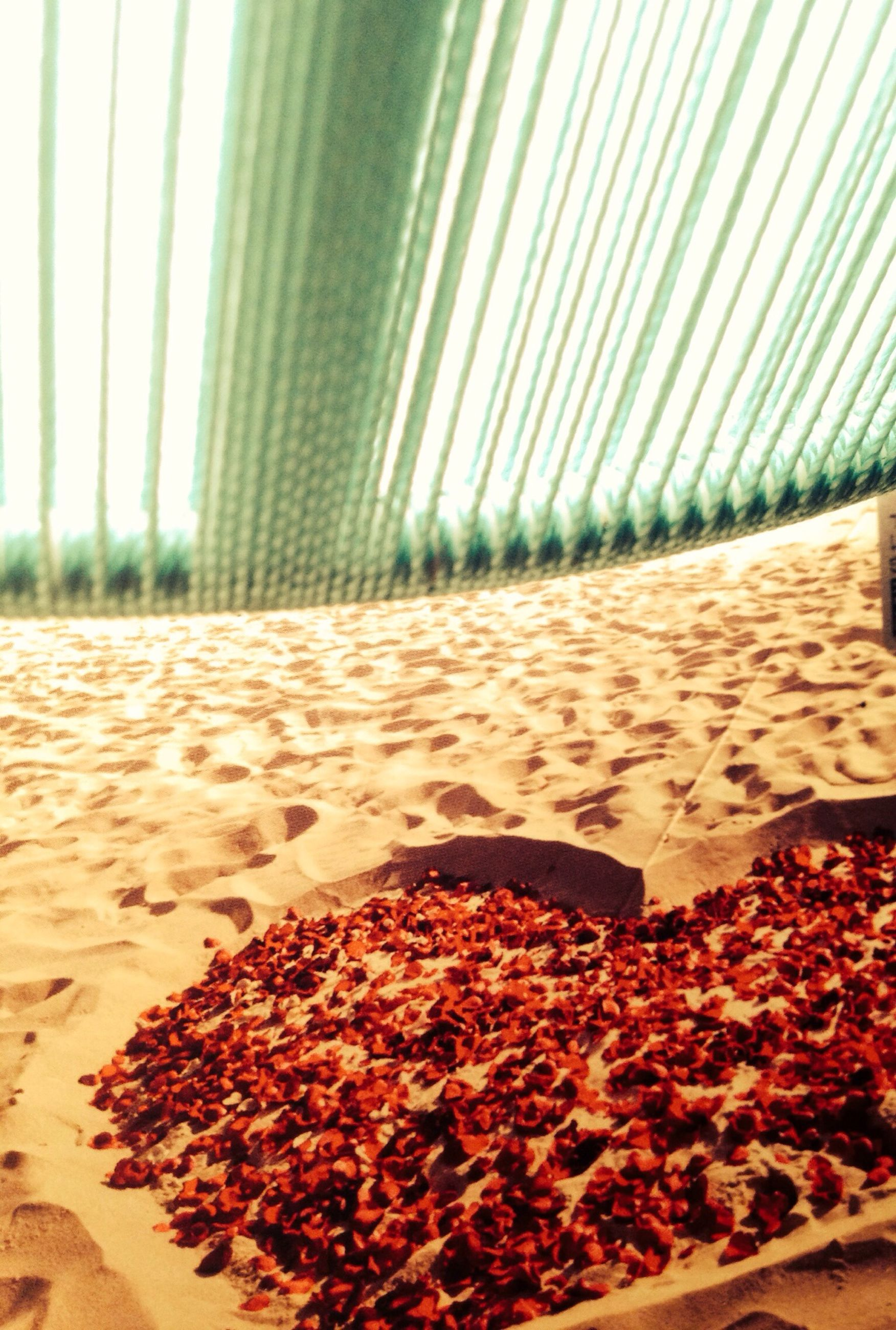 beach, sand, sunlight, leaf, agriculture, day, nature, no people, growth, outdoors, close-up, plant, surface level, shadow, abundance, tranquility, shore, red, pattern, selective focus