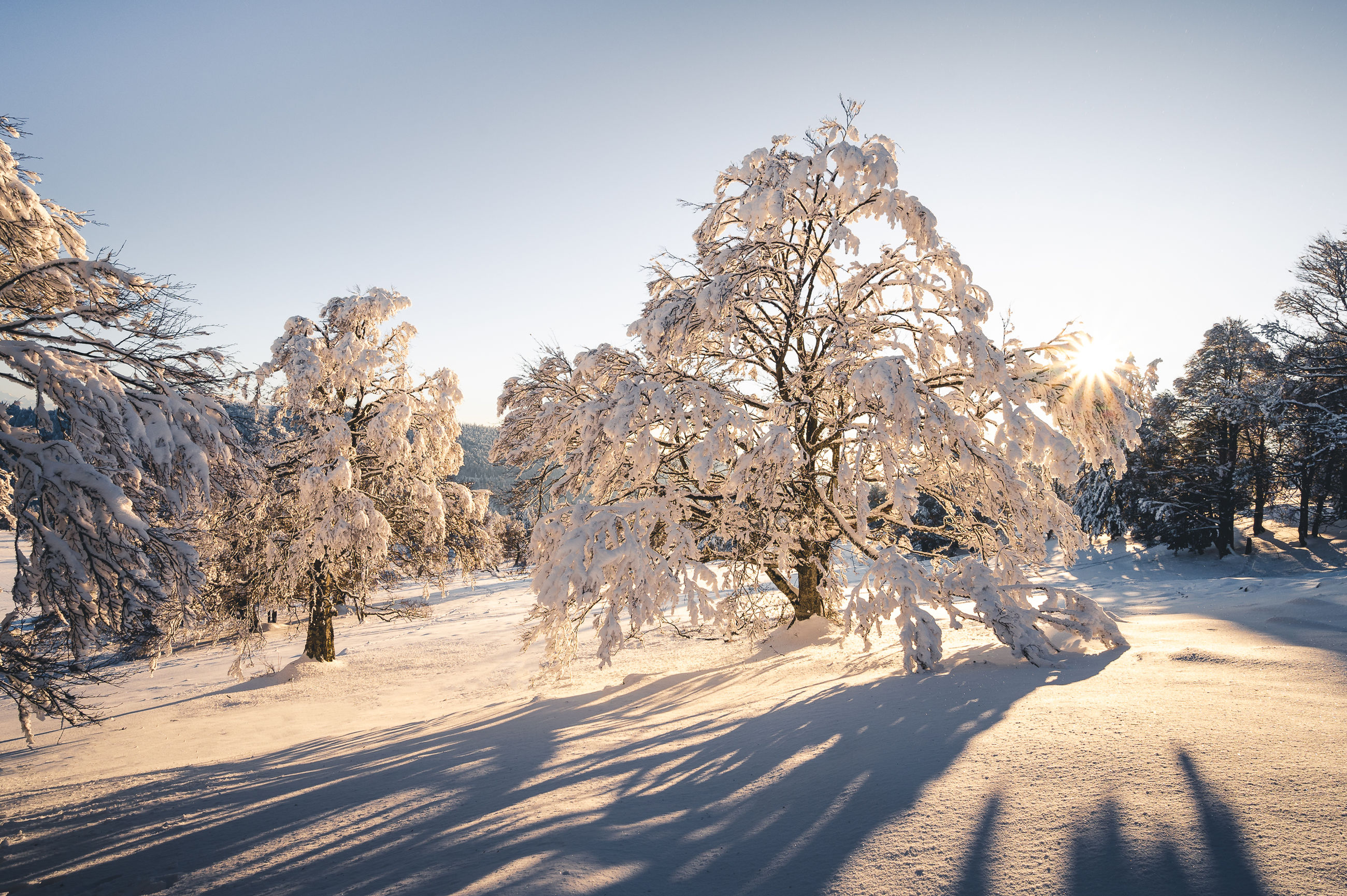 snow, cold temperature, winter, tree, nature, landscape, plant, environment, scenics - nature, beauty in nature, sky, land, coniferous tree, sunlight, pinaceae, pine tree, forest, pine woodland, mountain, frozen, tranquil scene, tranquility, blue, non-urban scene, travel, no people, road, white, shadow, travel destinations, sunny, woodland, mountain range, outdoors, ice, rural scene, frost, clear sky, polar climate, idyllic, freezing, day, sun, tourism, snowcapped mountain, morning, panoramic, footpath