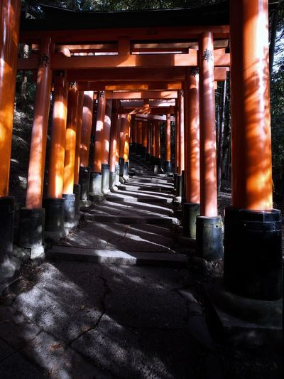 Torii gates. Torii Gate Kyoto Fushimi Inari Shrine Architectural Column In A Row No People Architecture Built Structure Illuminated Nature Religion Place Of Worship Capture Tomorrow