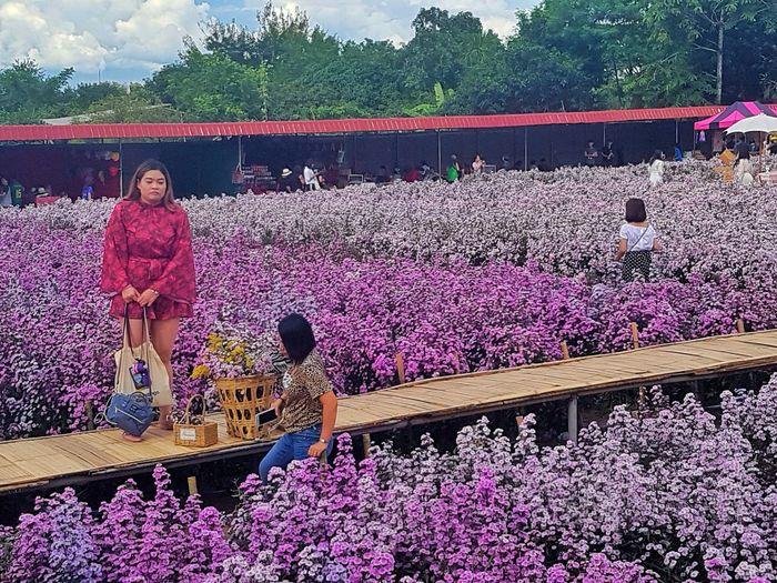 People on pink flowering plants against trees