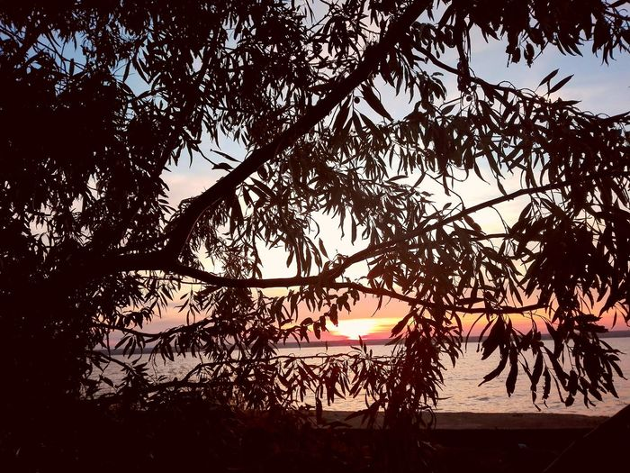 Sunset view Mamaia Lake Mamaia Beach Perspectives On Nature Siutghiol Lake Beauty In Nature Branch Day Growth Nature No People Outdoors Scenics Silhouette Sky Sunset Tranquility Tree Water