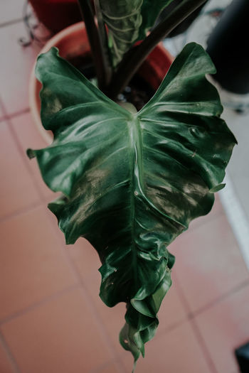 High angle view of leaf on table at home