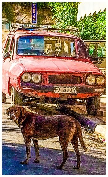 Classic Car Dog Hanging Out Streetphotography