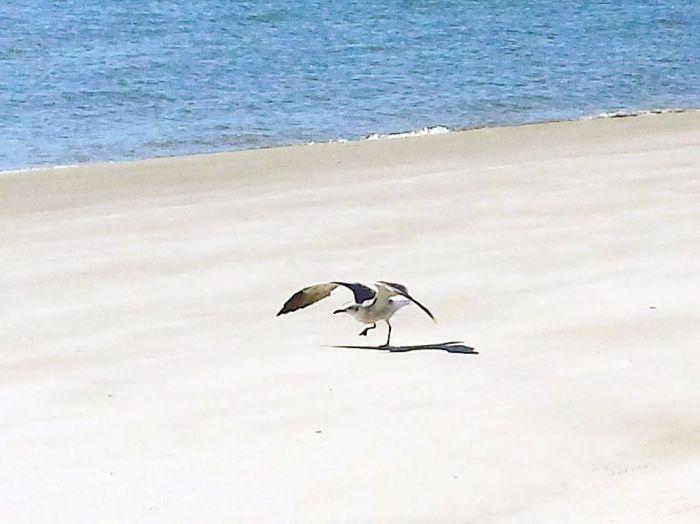 Hilton Head Island Sea Gulls South Beach Marina Seapines Bird Photography Beach Life Island South Carolina Protecting Where We Play