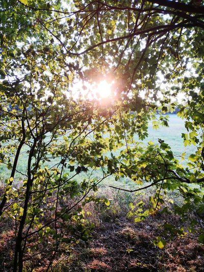 Tree Branch Sunlight Sun Sky