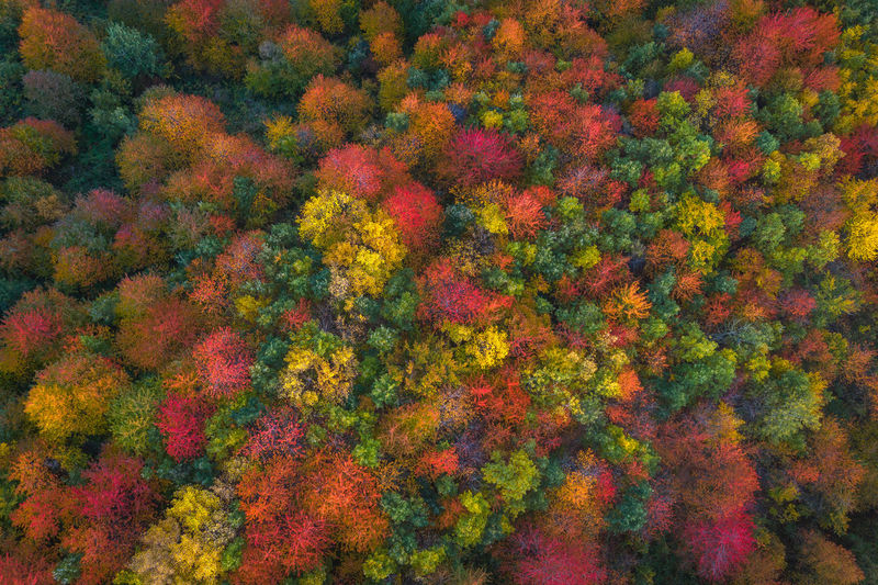 Colorful forest near my house, I waited for the last ray of sun to bring those dry trees to life Aerial Shot Autumn Drone  Drone Shot EyeEmNewHere Aerial Landscape Aerial Photography Aerial View Autumn Beauty In Nature Change Colorful Nature Day Drone Photography Drone View Dronephotography Droneshot Forest High Angle View Multi Colored Nature No People Orange Color Outdoors Plant