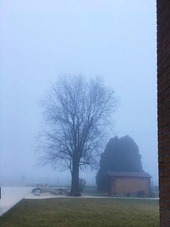 """Stile """"L'albero degli zoccoli""""... Outdoors First Eyeem Photo"""