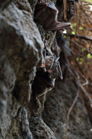 Bat Bats Close-up Day Detail Focus On Foreground Natural Pattern Nature No People Outdoors Part Of Rock - Object Selective Focus Tranquility Tree Trunk