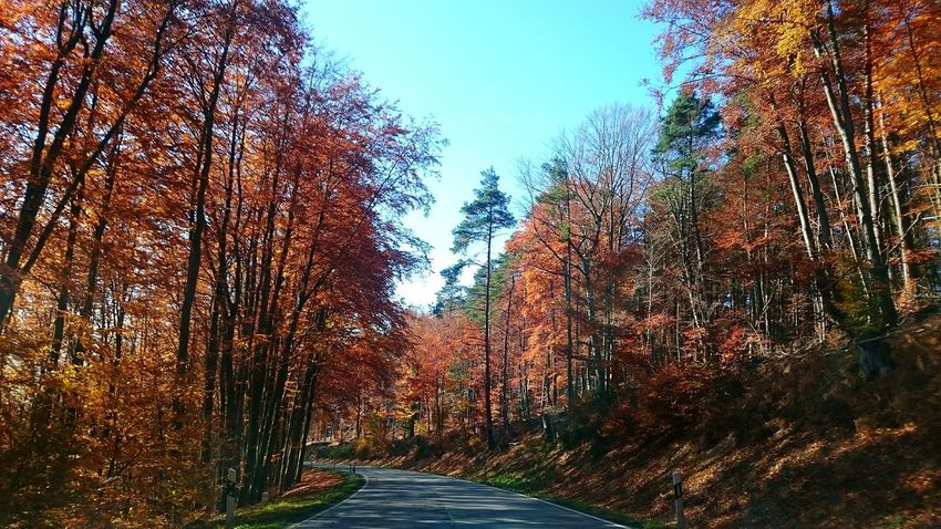 Beautiful Autumn Street Trees Sky Fall Colours Odenwald