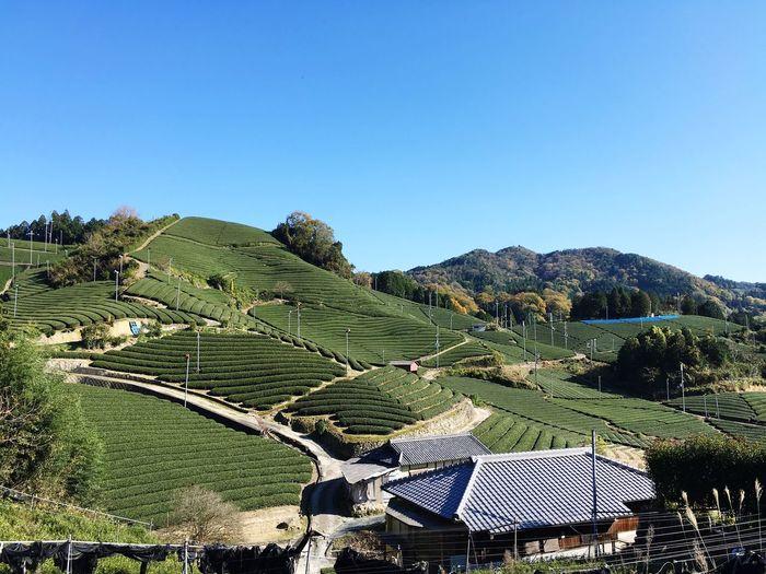 Wazuka Kyoto Teaplantation