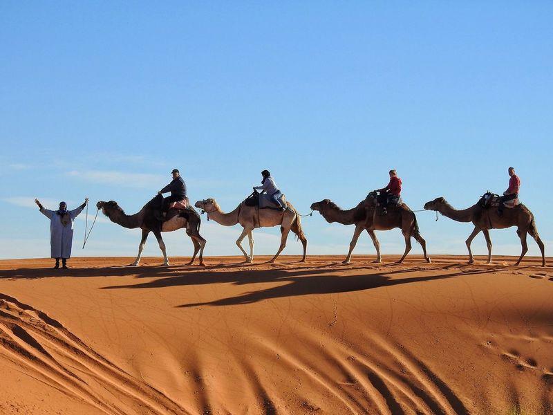 Check This Out Dunes Caravan Dromedary Camels Camel Riding Camel Ride Beduin Sahara Desert Traveling Morocco Shadows