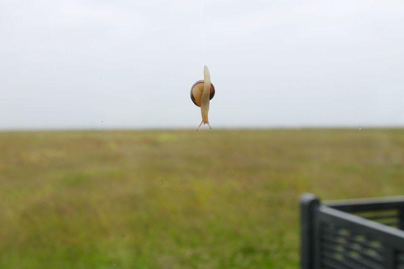 From My Point Of View Schnecke Slug Window Zoology