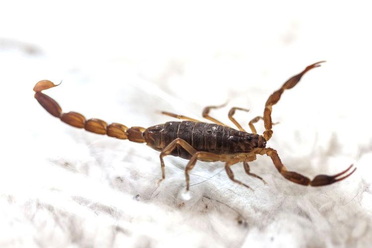 Close-Up Of Scorpion On Sand