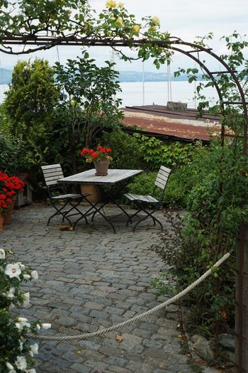 Tree Potted Plant Table Day Outdoors Plant No People Flower Nature Landscape Landscape_photography Landscape_Collection EyeEm Best Shots - Landscape Tranquility Tranquil Scene Lake Genfersee Lac Léman Yvoire, France Yvoire History Building Exterior Built Structure Architecture