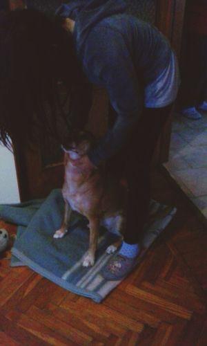 Dog Bestfriend Bigfriend Laika