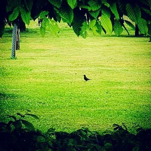 Free of any 4 legs animal Nature Bird Rural Scene Green Color One Animal Landscape Birdinthegrass Canong7x