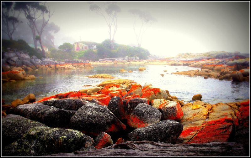 Australia Bays Of Fire Beauty In Nature Binalong Bay Colourful Foggy Day Orange Rocks Rocks And Water Tasmania Tranquility Travel Photography Landscapes With WhiteWall