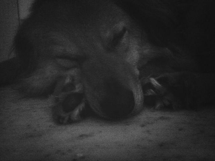 Mein Hund <3