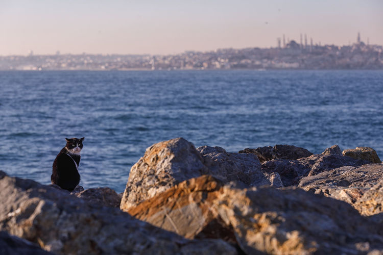 Cat Istanbul Seascape Sea Cityscape Embankment Water Rock - Object Rock Solid Nature Animal Themes Sky Animal Wildlife Beauty In Nature Animals In The Wild Animal One Animal Vertebrate No People Land Tranquility Sunset Outdoors Marine