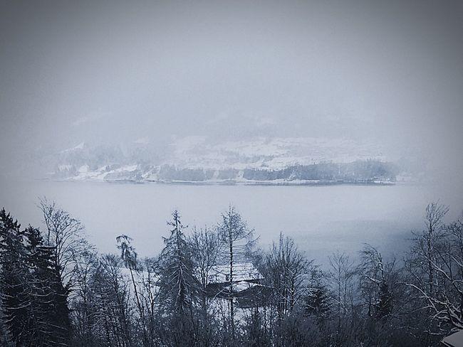 Winter Cold Days WhiteWonderland Switzerland ❄️❄️ First Eyeem Photo