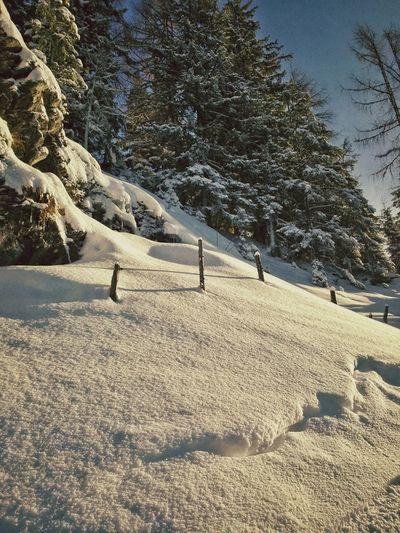 Nature Landscape Winter Snow