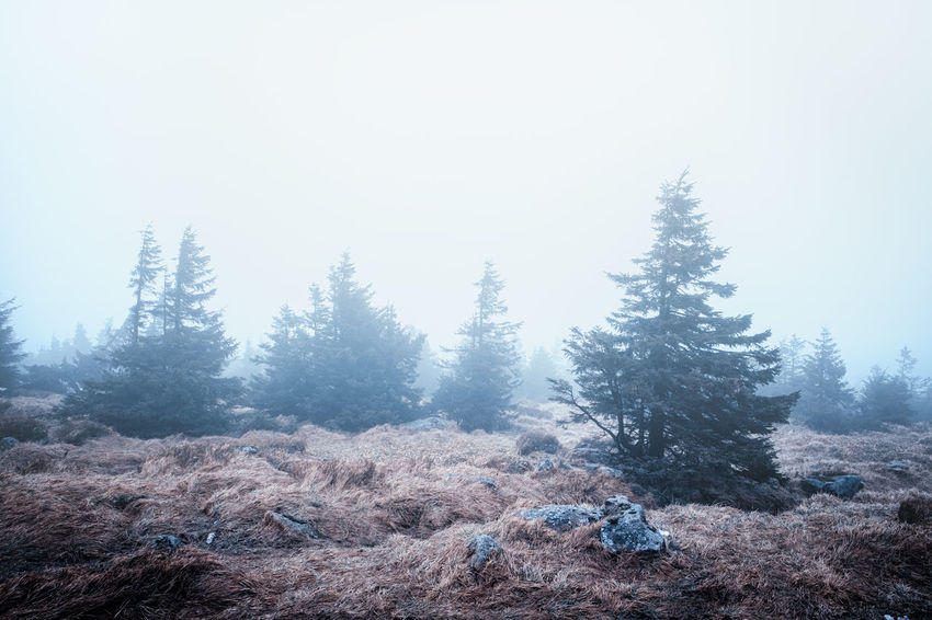Tree Plant Sky Beauty In Nature Tranquility Nature Day No People Scenics - Nature Tranquil Scene Environment Land Winter Mountain Clear Sky Non-urban Scene Growth Landscape Forest Outdoors Pine Tree Coniferous Tree Harz Brocken