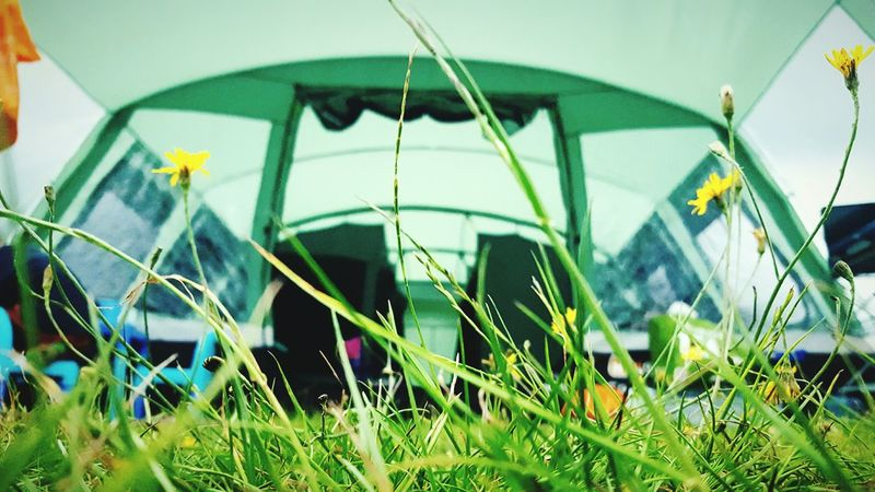 This Is Perspective day 29. Looking Up On The Ground Camping Setting Up Camp Wild Flowers