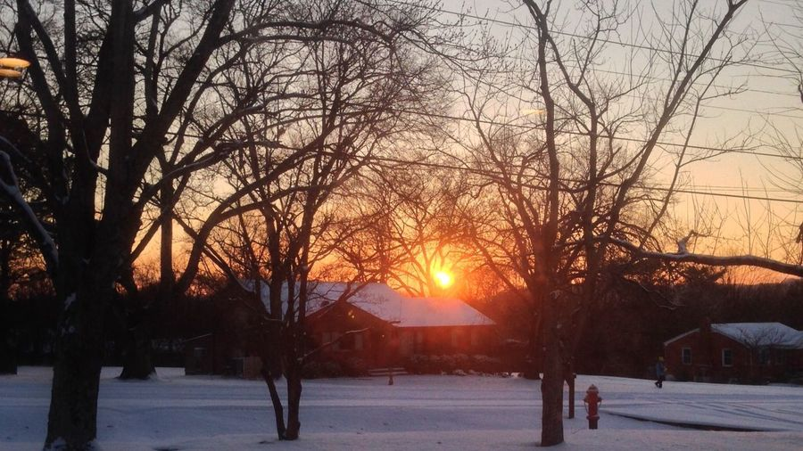 Sunset Snow Cold Temperature Winter Tree Sunset Plant Sky Sun Nature Beauty In Nature Outdoors Sunlight