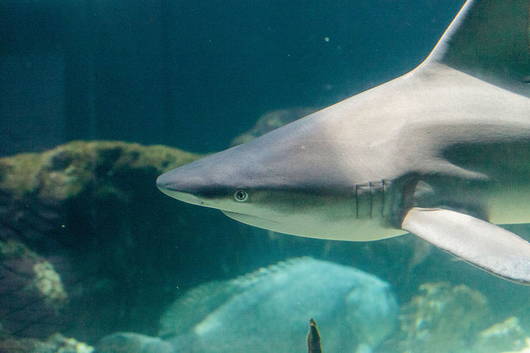 Close-up of shark swimming in aquarium